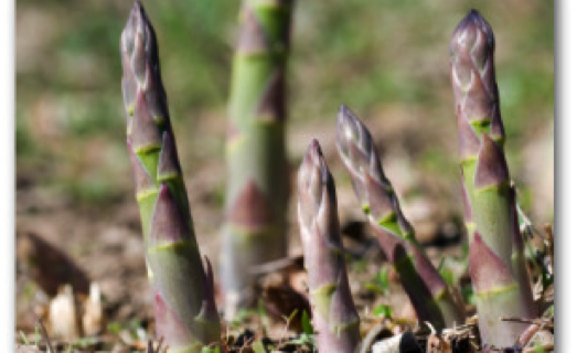 Spear into Spring with Asparagus