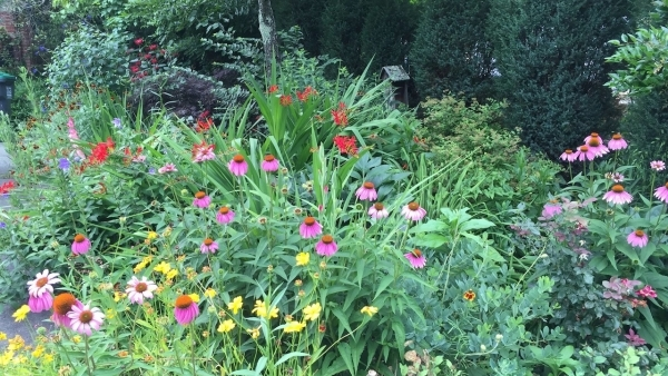 Getting Started in Ornamental Gardening, Part II