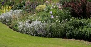 Neat edge enhances this garden's curves
