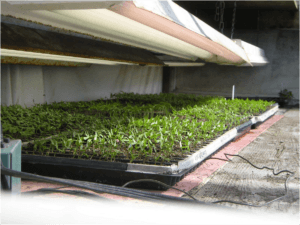 Seedling trays with heat mats Source: University of Vermont