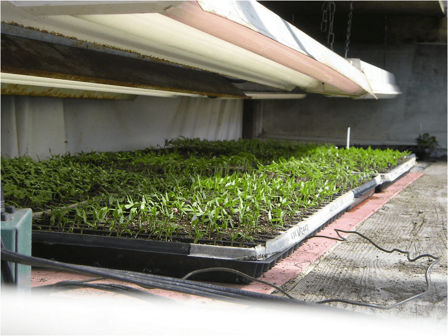 gardener mats supply biodegradable seedling with starter in heat sizes marigolds seed of s mat buy starting flat
