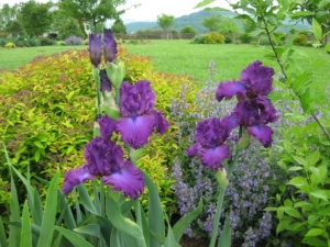 Author's Ornamental Garden in May