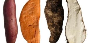 yam-vs-sweet-potato-main