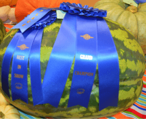 Anne Dickie's 2015 Grand Champion Blue Ribbon watermelon
