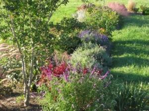 Author's Ornamental Garden in September