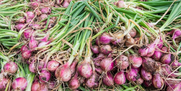 Shallots — A Gourmet Treat
