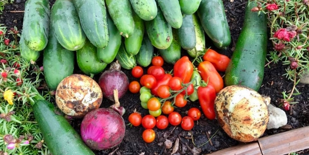 Backyard Composting With Practical Tips From The Pros