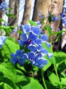 http://www.fhwa.dot.gov/byways/photos/60952