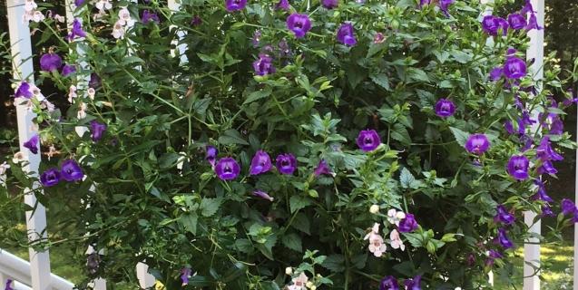 The Ornamental Garden in September