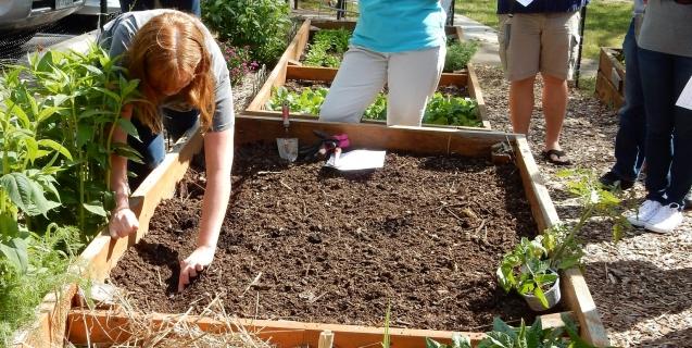 Gardening Events in November