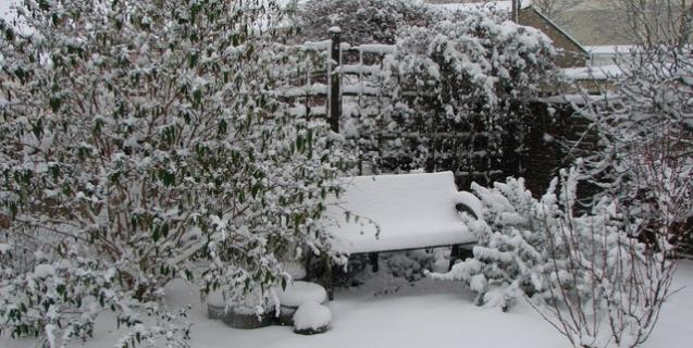 January Tasks & Tips in the Ornamental Garden